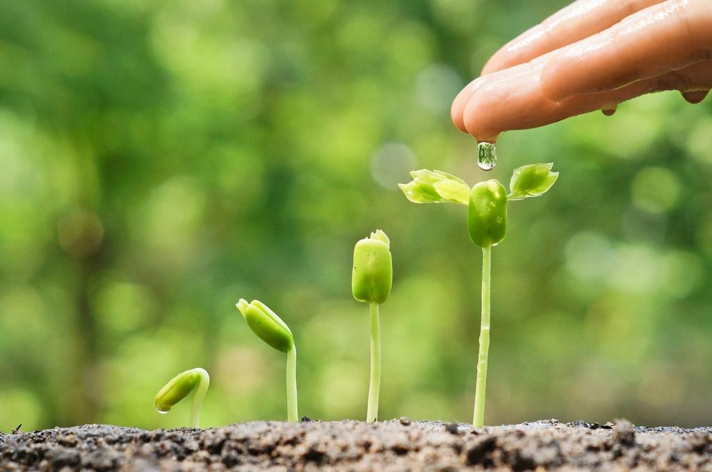 Erbe e piante officinali coltivate