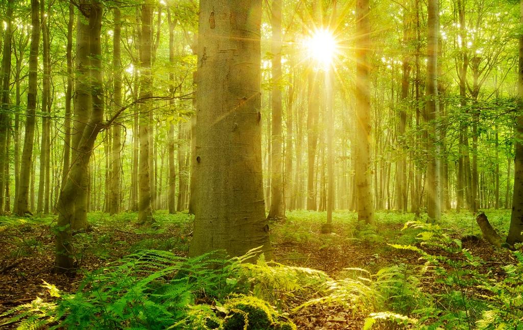 Erbe e piante officinali spontanee