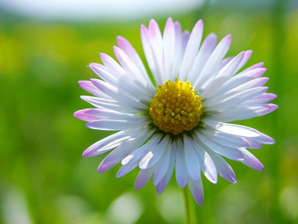 Cure e rimedi naturali con la Margheritina