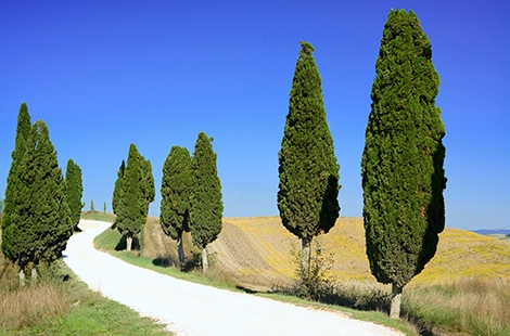 Tornitura alberi lunghi